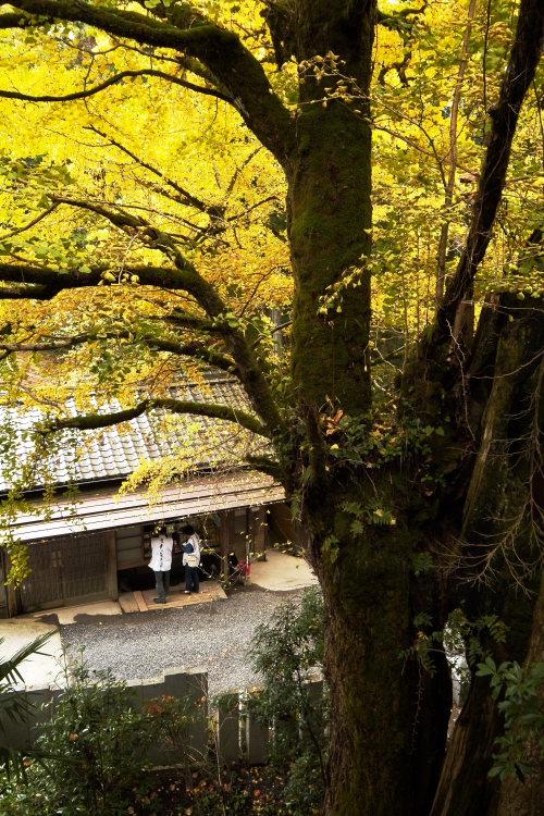 44番大宝寺(愛媛県久万高原町)イメージ8