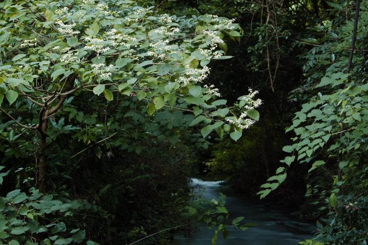 三ヶ村泉(愛媛県東温市)イメージ6