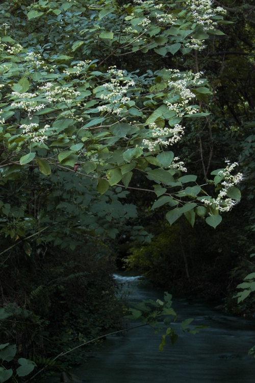 三ヶ村泉(愛媛県東温市)イメージ7