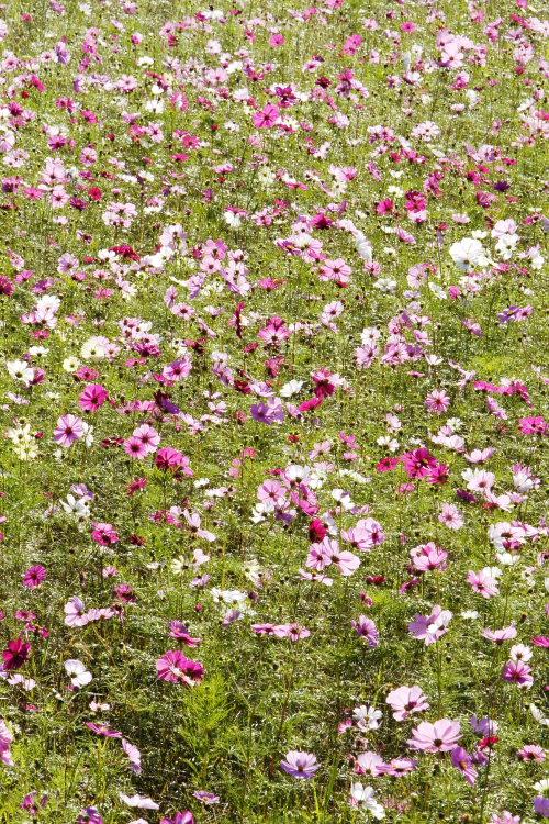 中山池自然公園(愛媛県宇和島市)_1イメージ15