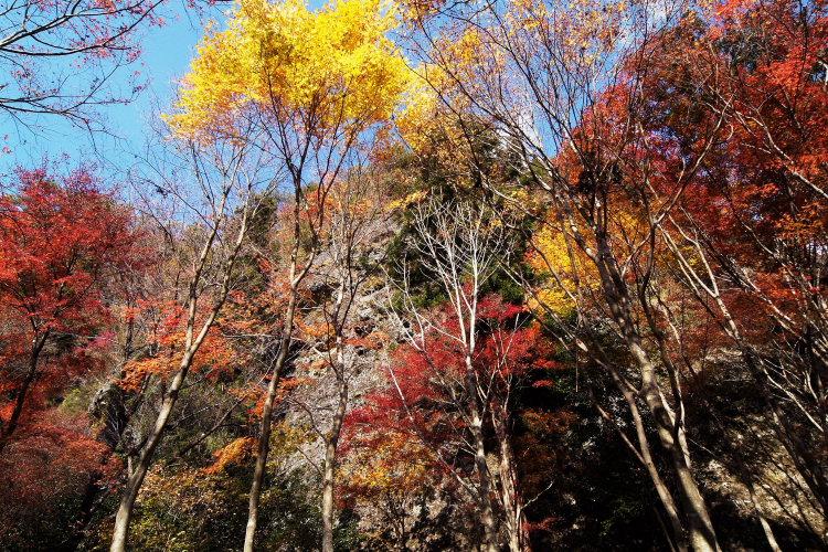 古岩屋(愛媛県久万高原町)イメージ4