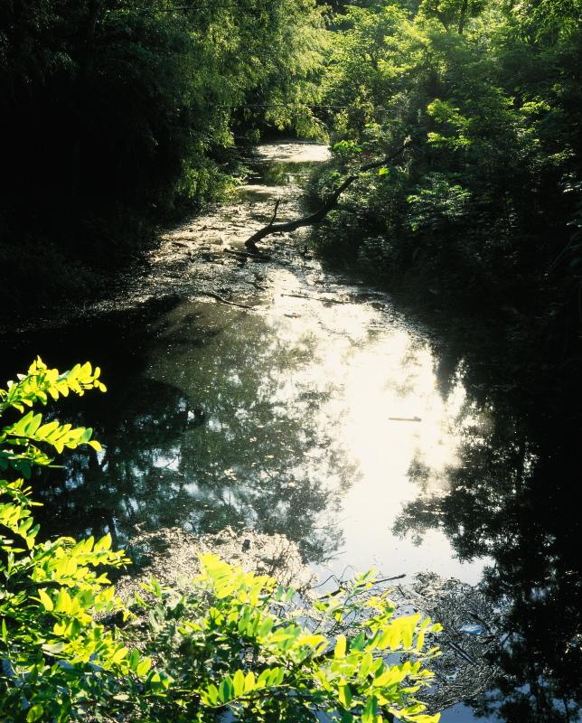 二十日泉_春 (愛媛県東温市)イメージ1
