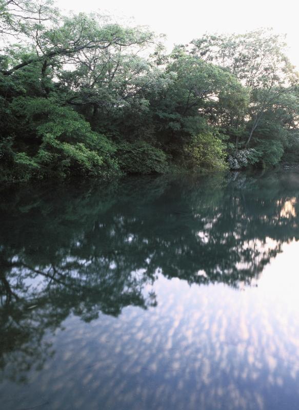 中野新泉_春(愛媛県松山市)イメージ1