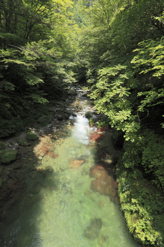 小田深山_夏(愛媛県内子町)_1イメージ1