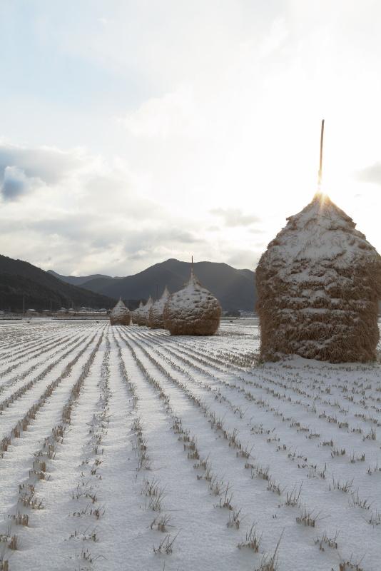 ワラグロ_冬(愛媛県西予市)イメージ1