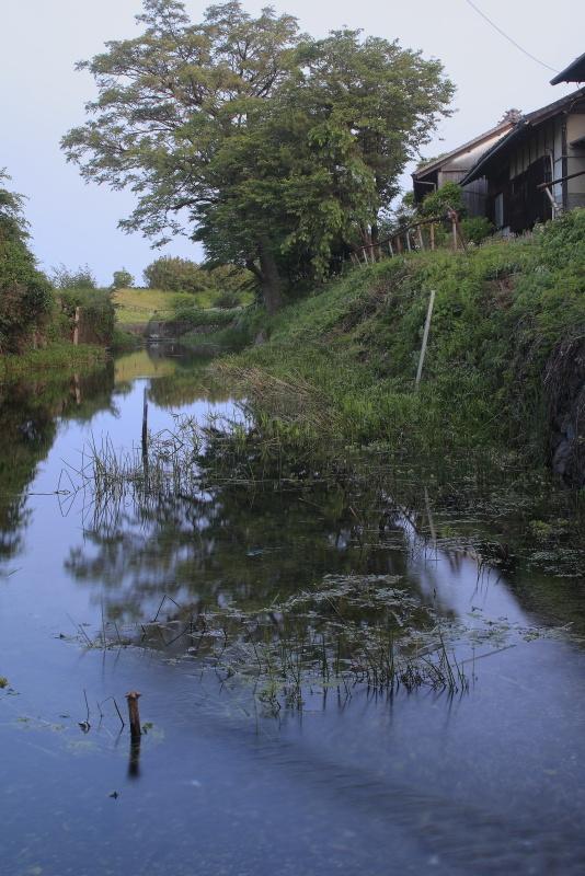 夫婦北泉_5月(愛媛県松山市)イメージ2
