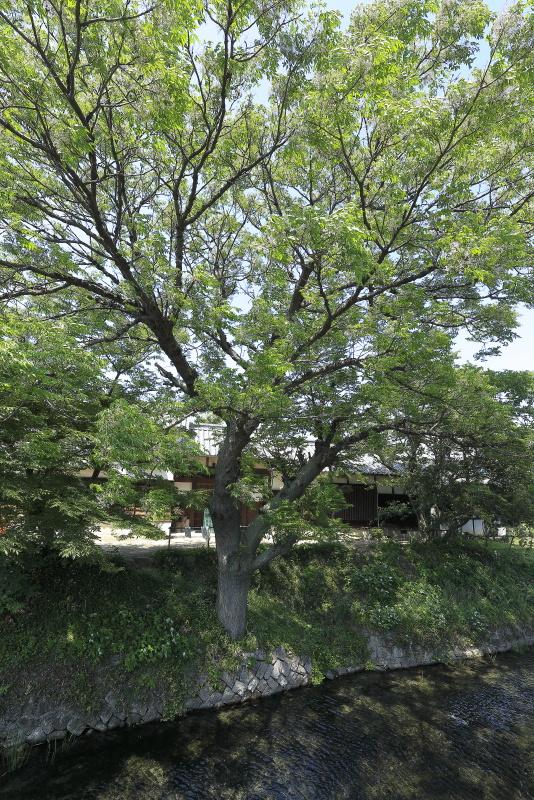 夫婦北泉_5月(愛媛県松山市)イメージ8