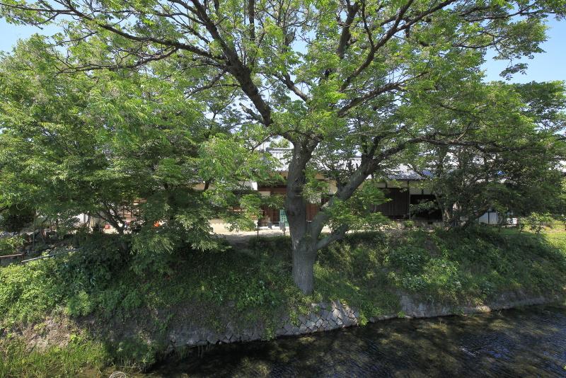 夫婦北泉_5月(愛媛県松山市)イメージ9