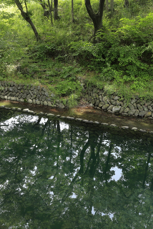 龍沢泉_5月(愛媛県東温市)_1イメージ6