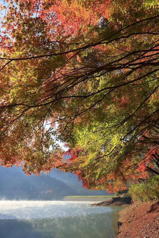 関地池の朝_11月(愛媛県西予市)イメージ1