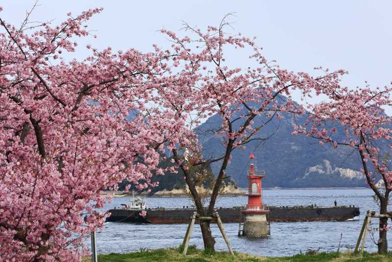 来島海峡_2月・河津桜(愛媛県今治市)イメージ1