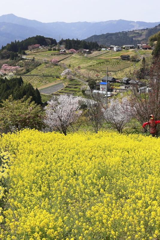 山里の春(愛媛県内子町)イメージ1