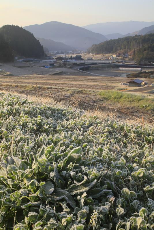 遅霜の降りた山里_3月(愛媛県久万高原町)イメージ1