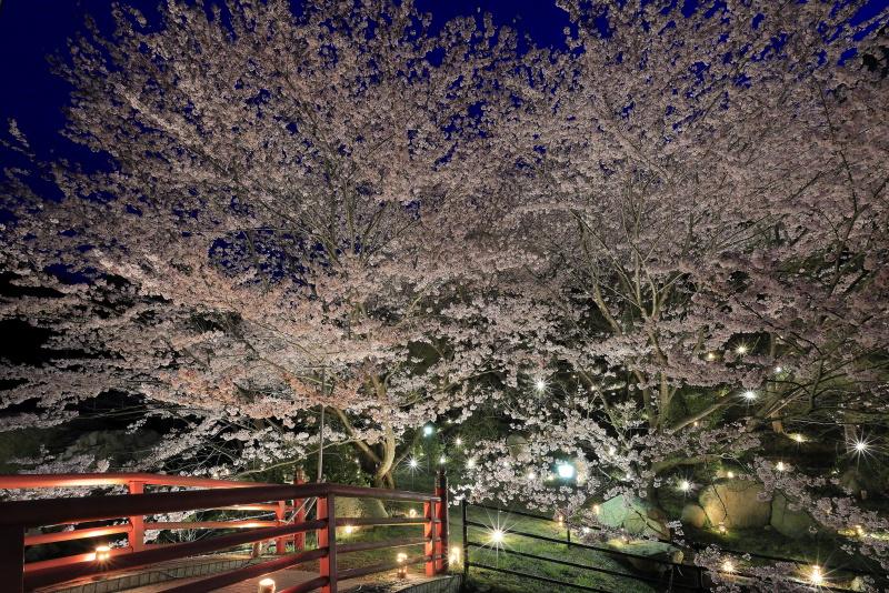 いわぎ桜公園_岩城島(愛媛県上島町)イメージ1