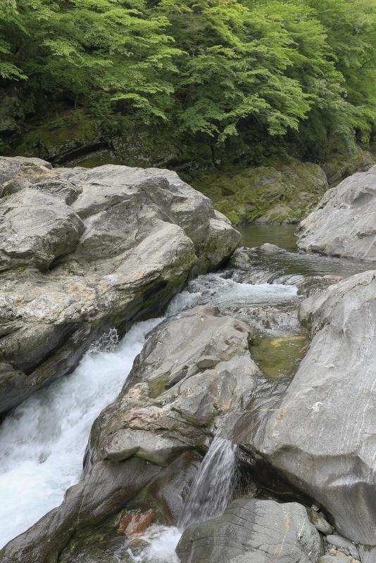 程野渓谷(別子渓谷)_5月(愛媛県新居浜市)イメージ14