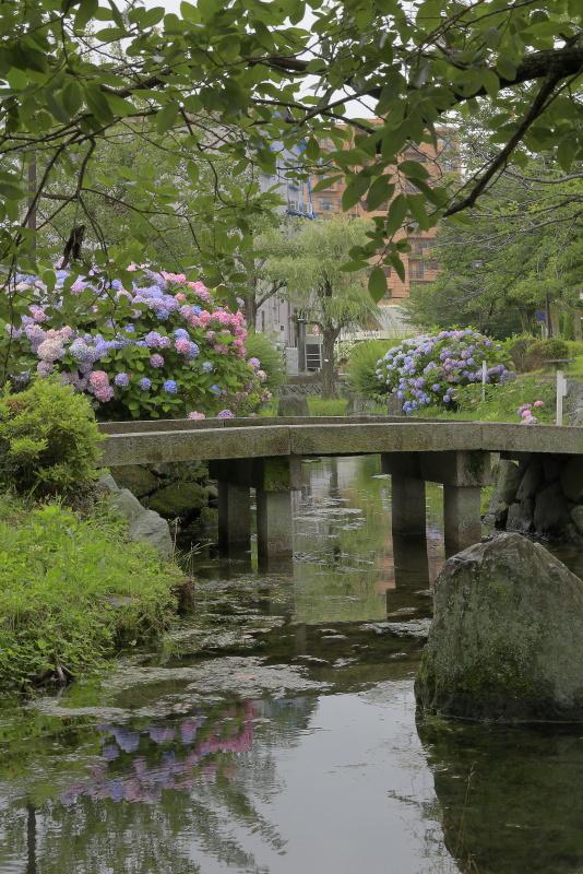 アクアトピア水系(紫陽花)_6月(愛媛県西条市)イメージ16