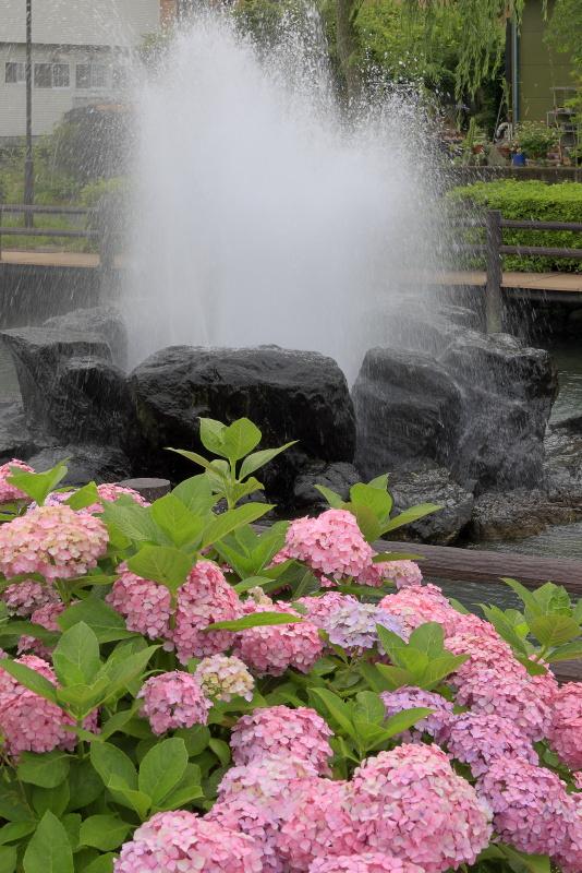 アクアトピア水系(紫陽花)_6月(愛媛県西条市)イメージ18