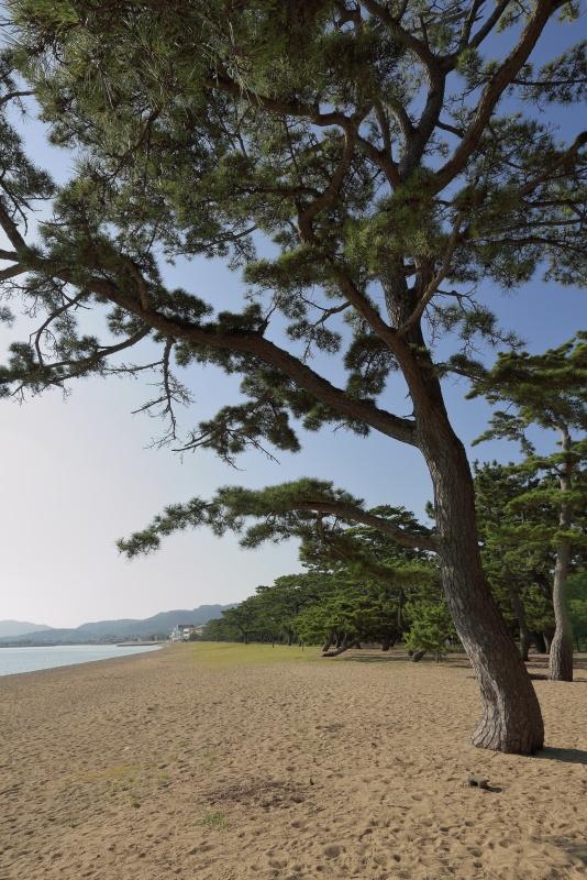 津田の松原(琴林公園)_7月(香川県さぬき市)イメージ1